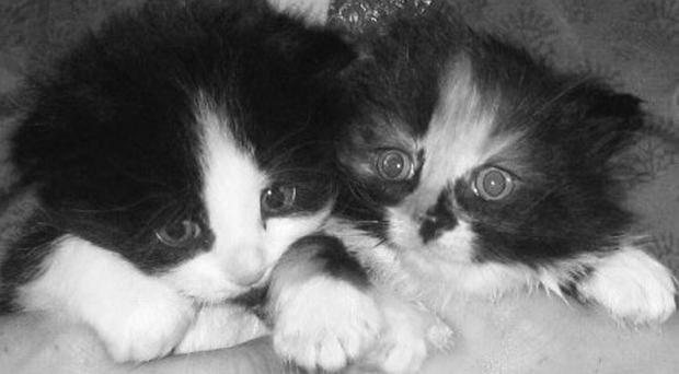 Two of the kittens rescued from a north Belfast alleyway