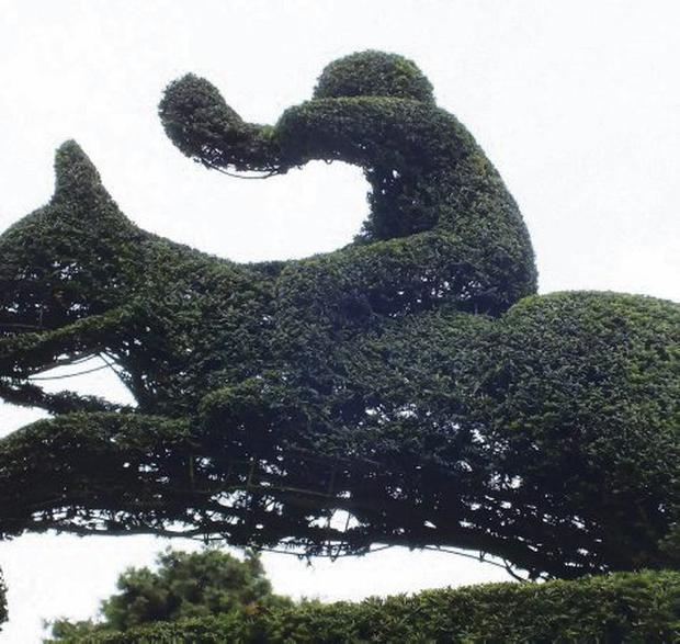 One of the famous yew figures on the Mount Stewart Estate