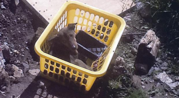 Dog sitting in the basket