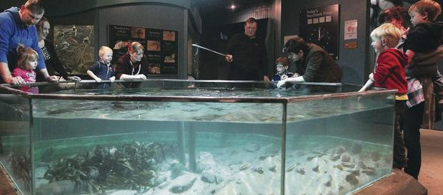 Exploris aquarium in Portaferry
