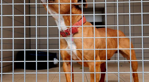 Vets have had to put down seven badly injured dogs believed to have been used for hunting