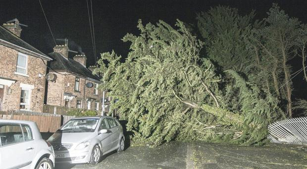 A tree and fence blown down across the road at O'Neill Avenue, Newry, last night