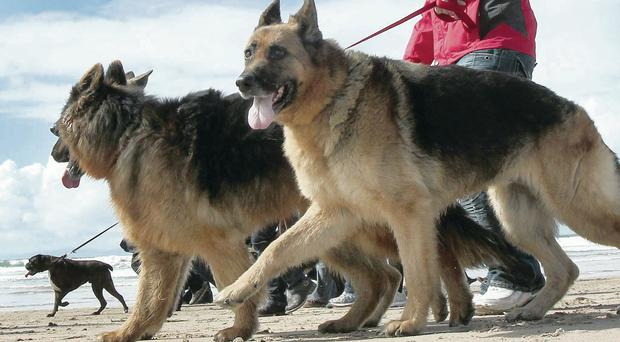 Dogs could still be banned from beaches at certain times of year in Coleraine borough