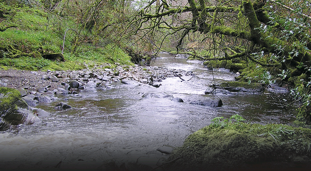 The River Faughan