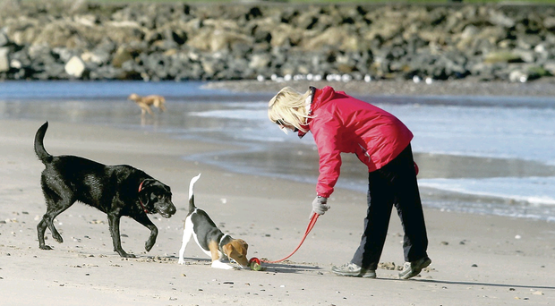 A woman and her dogs enjoy yesterday's pleasant weather at Ballycastle beach