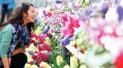 Anni Hong from Seattle, Washington State, admires the springtime flowers at Botanic Gardens