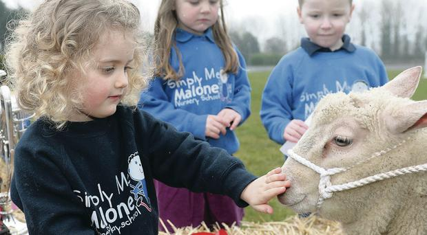 Alessia Geron (left) and Malone Nursery School friends with a sheep at the show's launch