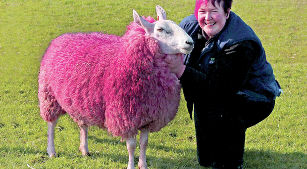 Sandra Hunter with one of her pink sheep