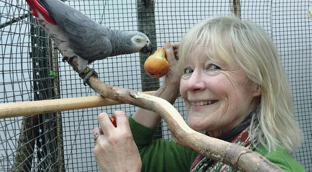 Lady Anthea Forde yesterday with one of the parrots which was returned after being stolen from her butterfly house at Seaforde