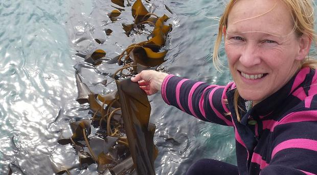 Kate Burns is growing thousands of tonnes of kelp on ropes that extend out from the shoreline into the sea around Rathlin