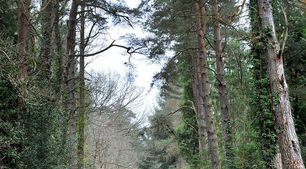 Only 10% of England is woodland
