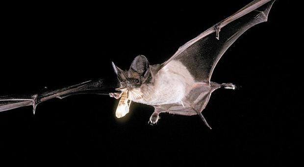 The study reveals more about bats' sophisticated navigational skills
