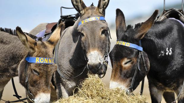 Donkeys were auctioned for Belgian relief charities at the start of the First World War, records have revealed