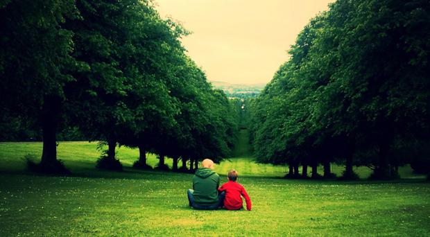 Tree-mendous: the lime trees on Prince of Wales Avenue, Stormont