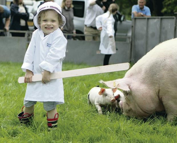 Jack Shearer has fun in the Pig Section at Antrim Show