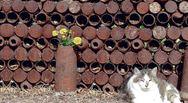 Somme cat sleeps amid the shells