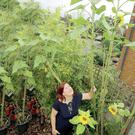 Tall order: Belfast Telegraph's Linda Stewart with Dolores McAllister's sunflower
