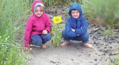 Lucy and Henry McCleary spotted a tiny sunflower on Ballywalter beach