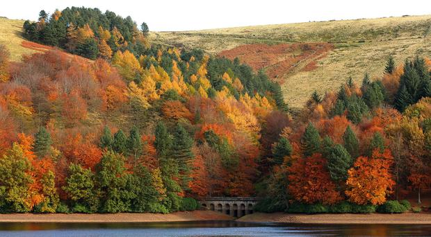 The colours of autumn can boost people's spirits, according to new research