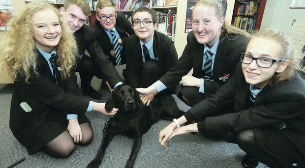 Bart the guide dog is the centre of attention at Portadown College
