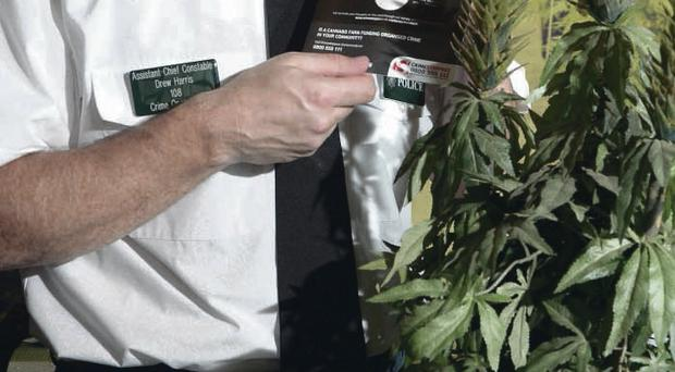 Assistant Chief Constable Drew Harris with a Scratch and Sniff cannabis card yesterday