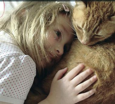 Comfort: A beloved pet cat