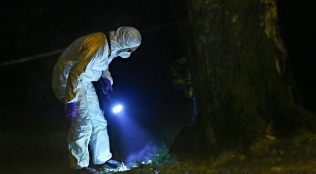 A forensic scientist examines the scene of a paramilitary shooting in Poleglass on the outskirts of Belfast on Sunday night. The victim was believed to have been forced against a tree and shot in the leg