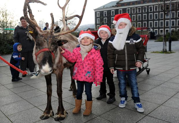 Myley Bond, Reuben Laverty and Makenzie Bond meet a reindeer during the family fun day which was held in north Belfast yesterday