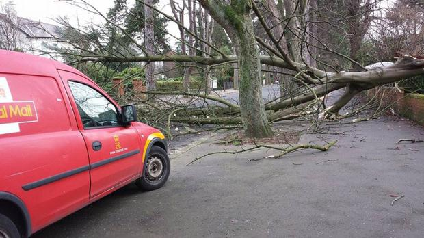 Storm Rachel caused a tree to fall in east Belfast's Cyprus Avenue in January 2015