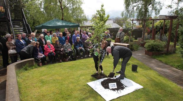 A tree in memory of IRA victim Jean McConville's is planted at the WAVE Trauma Centre in Belfast last year. The Centre is to receive a 30,000 pound award