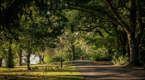 Leafy Lurgan Park, the second largest urban park in Ireland