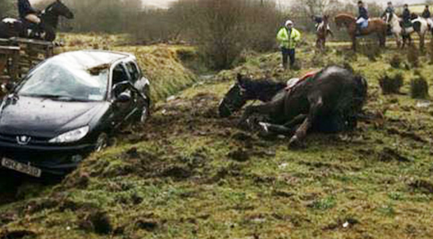 A horse falls at the car jump during the charity riding event