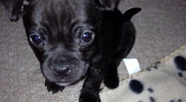 Customer Michaela Harvey's puppy Bane, who died three days after collection from a trader in Scotland