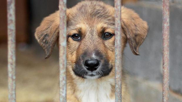 There are calls for tougher penalties for puppy farm owners
