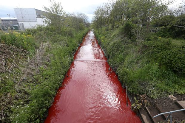 Belfast's Blackstaff River turns a startling shade of red yesterday