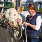 Christine Murphy from Dromara with Jaguar, a Charolais, at the Cattle Hall