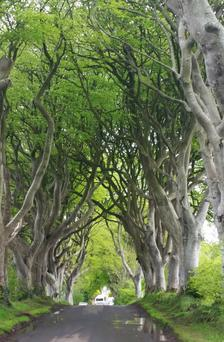 The otherworldly beauty of the Dark Hedges has us under a spell
