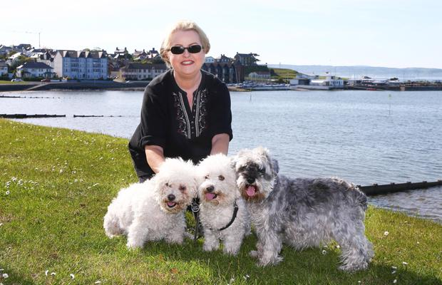 Frances and her dogs Heidi, Bailey and Walter at the Dirty Duck in Holywood, and (below) the Esplanade in Bangor, where they were able to get water