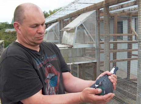 Harry McCloy has been overwhelmed with the response to his plea for information on pigeons stolen from his loft