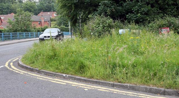 Overgrown verges, which Finance Minister Arlene Foster wants tackled by the Department for Regional Development