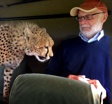 McCaldin with the inquisitive cheetah
