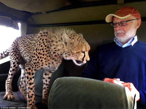 Fermanagh man Mickey McCaldin's startling encounter with a cheetah in Kenya