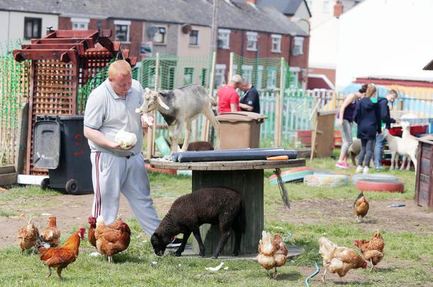 In a small corner of west Belfast, country life has come to town with the opening of a community-run mini-farm