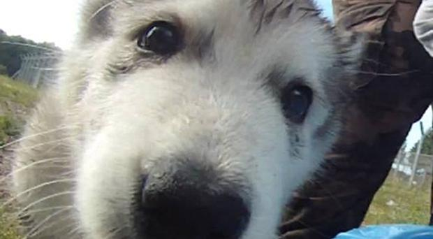 Bark was saved from the brink of closure following a massive fundraising campaign (Bark/PA)