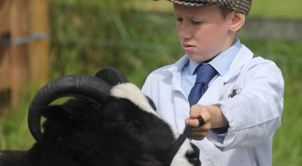 Alex Calhoun, champion young handler at Clogher Valley Show