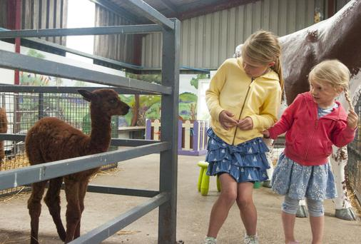 Lexi (7) and Hannah (4) Young take a close look at the baby alpaca at the Ark Open Farm yesterday