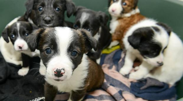 Assisi has been inundated with callers offering to rehome six pups