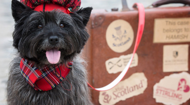 A three-night break is up for grabs for the winning pooch and its owners