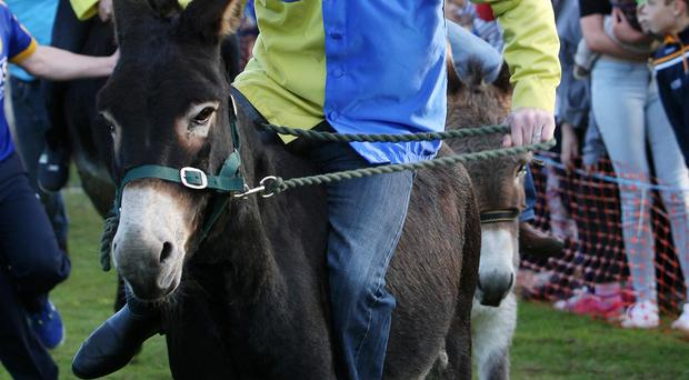 Tony McCoy trying to keep his donkey on course
