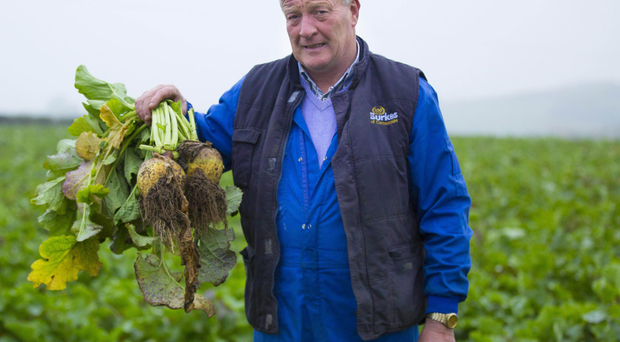 Farmer Joe McCarragher with some of the turnips for which he is being paid a paltry 8p each